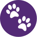 Icon_paws_purple